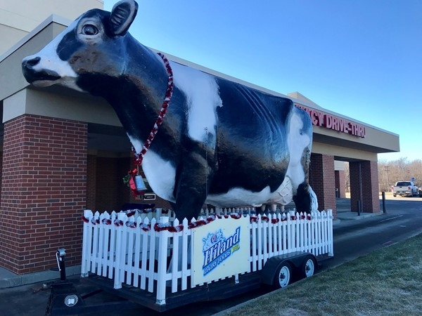 Annabelle, the Hiland Dairy Cow, visited the Newton HyVee today
