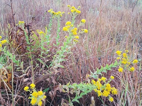 Wild flowers are still in bloom at Big Woods Lake. Come out and go for a walk and enjoy the fall