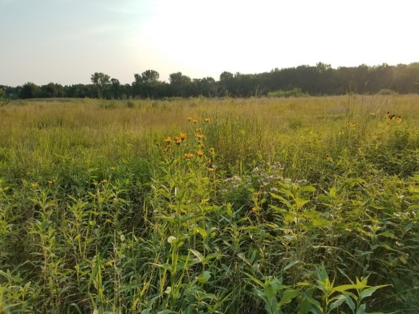 Wild flowers are still in bloom at Big Woods Lake. Come out and go for a walk and check them out
