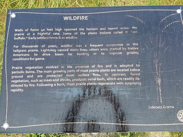 Come out to Big Woods Lake and learn about wildfires. Also check out the many other plaques